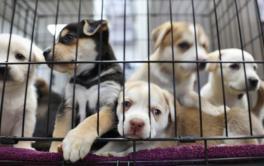 Por que comprar um pet é visto como algo ruim?