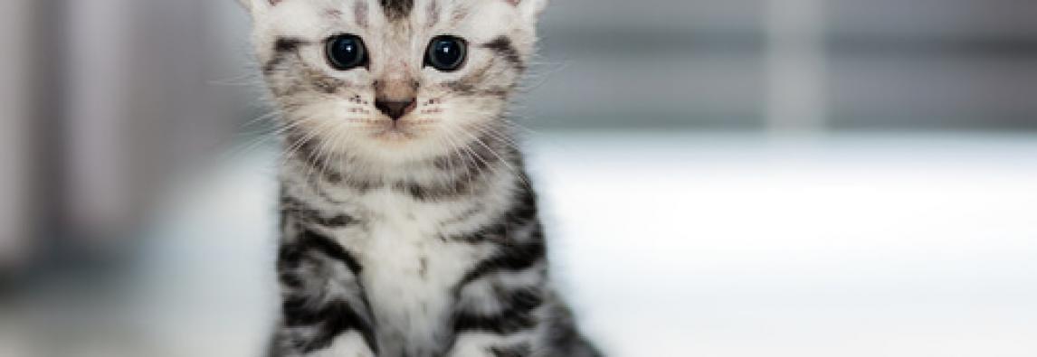 Nomes de Gatos e Gatas – 1000 Dicas de A até Z, porte e estilo
