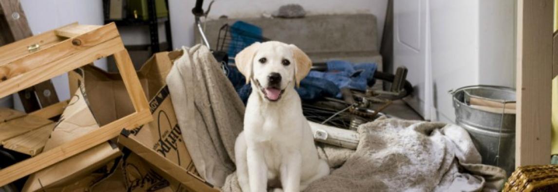Seu cão destrói tudo quando você sai de casa? Veja por que isso acontece e o que fazer