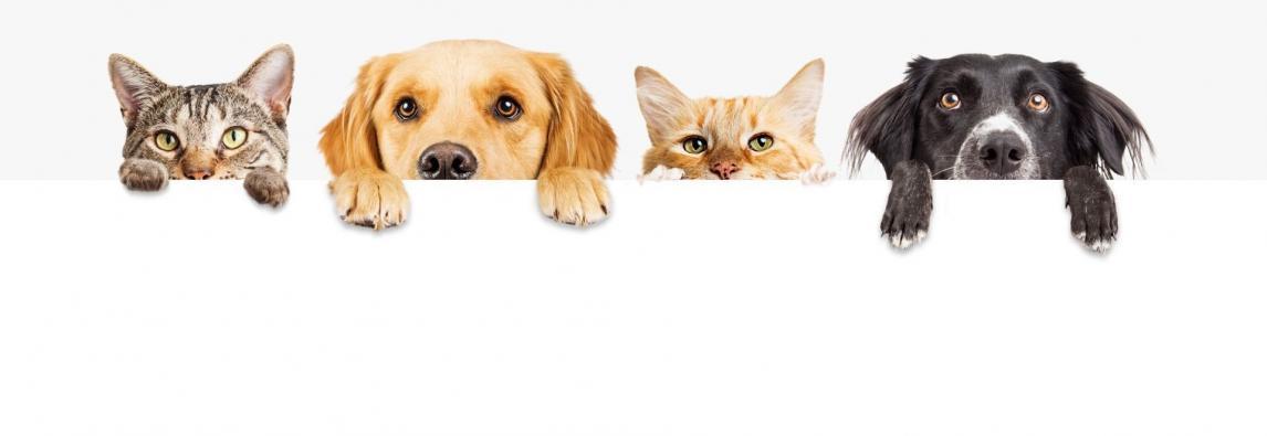 É mesmo possível existir animais com síndrome de Down?