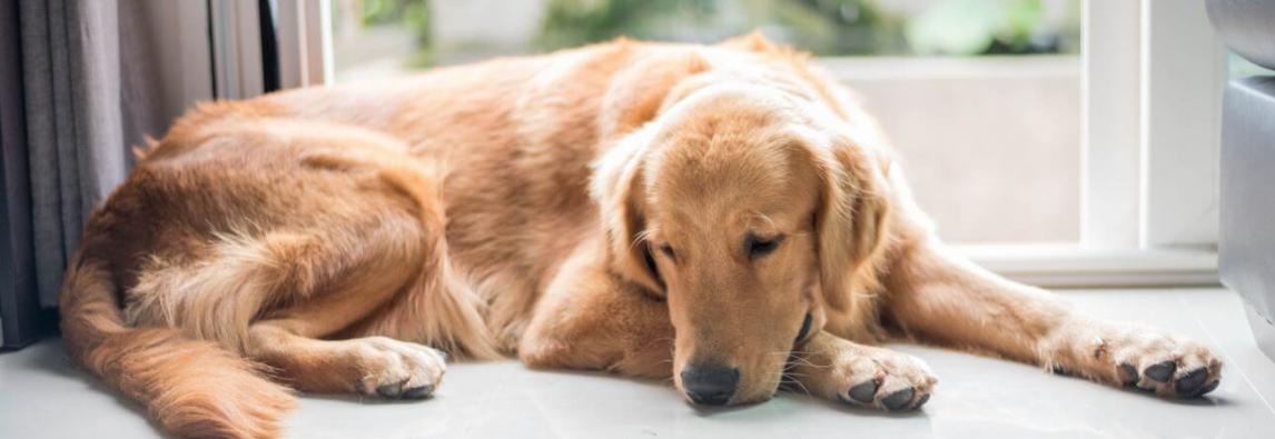 Brincadeiras para cachorro: 9 atividades para praticar dentro de casa