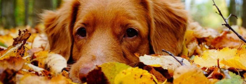 Confira os principais cuidados com animais no outono e no inverno