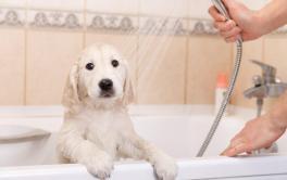 Anote receitas caseiras para higienizar seu cãozinho e limpar toda a casa