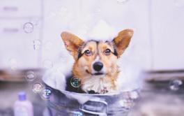 Saiba sobre a importância do banho no pet