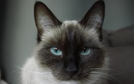 Piometra em gatos: conheça essa perigosa doença