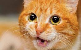 Esporotricose – Entenda como essa zoonose afeta os cães e gatos
