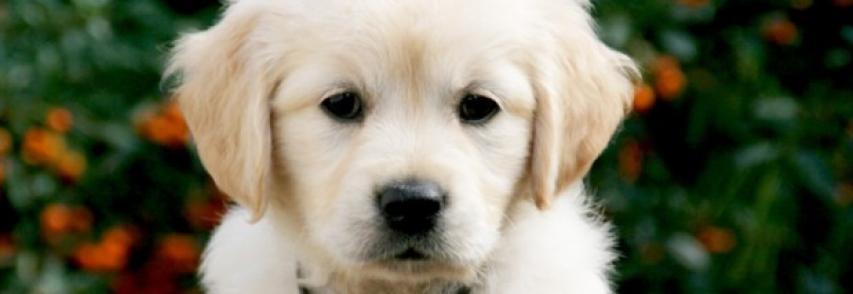 Ensinar o seu cão a não comer alimentos do chão e de estranhos