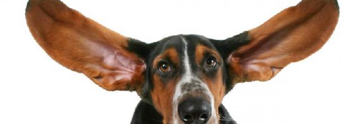 Cachorro surdo – Como identificar a surdez em cães