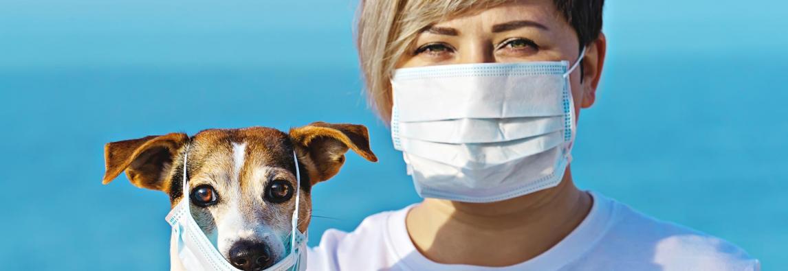 Máscara no cachorro? Banho no gato? Como proteger os pets do coronavírus