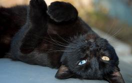 Por que é tão perigoso doar gato preto no mês de outubro?