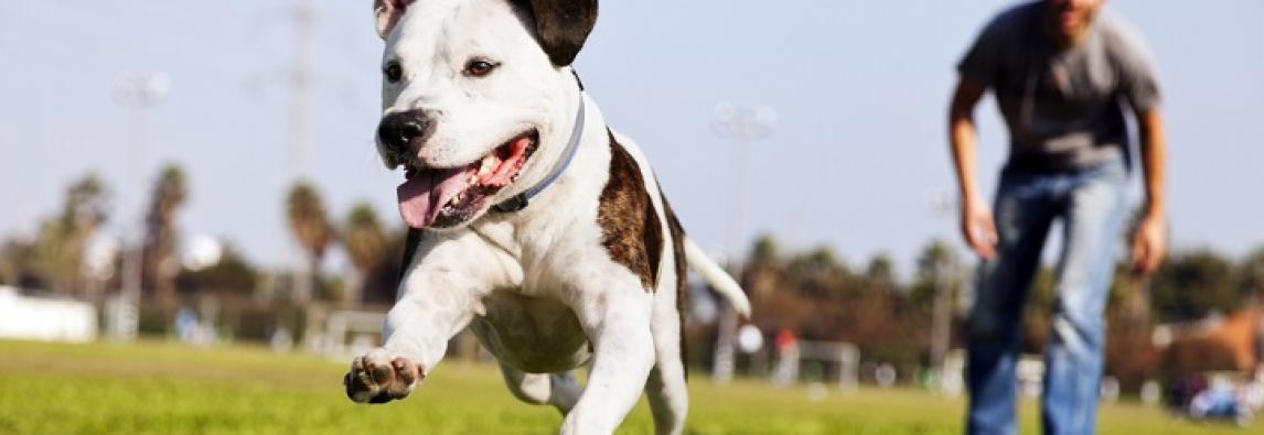 Por que os cachorros fogem de casa?