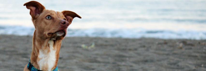8 DICAS DE COMO PLANEJAR O NOVO ANO COM SEU ANIMAL DE ESTIMAÇÃO
