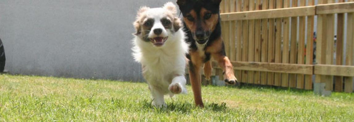 Pets no condomínio: como evitar problemas e manter a boa convivência com os vizinhos
