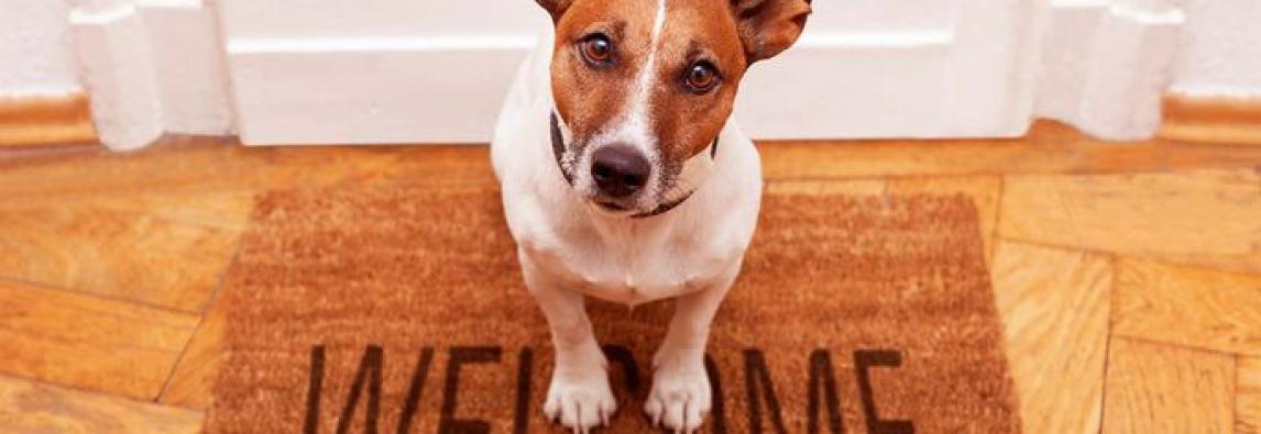 Cachorro em apartamento: 8 dicas para manter a casa limpa