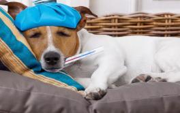 Tosse dos Canis – Tudo o que você precisa saber