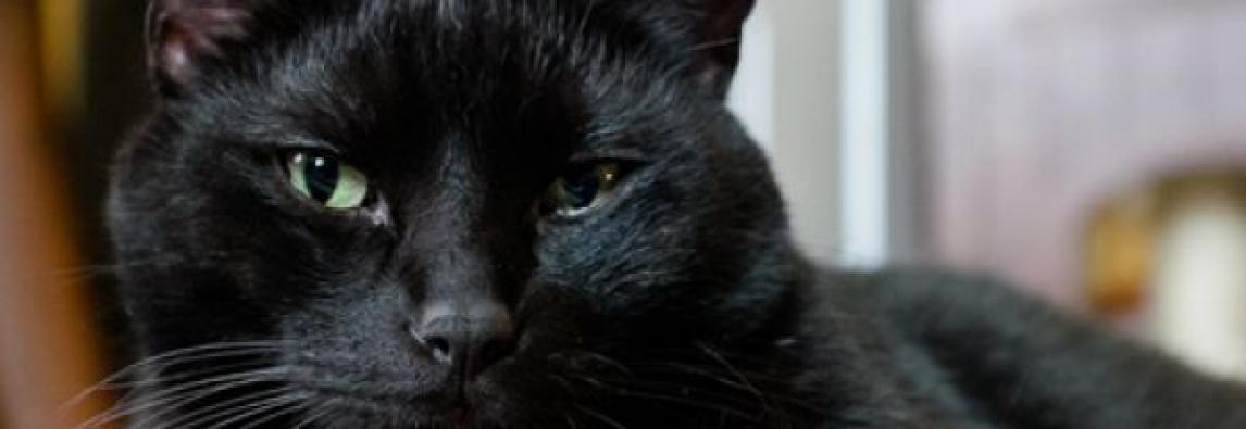 Saiba mais sobre León, o gato de O sétimo guardião
