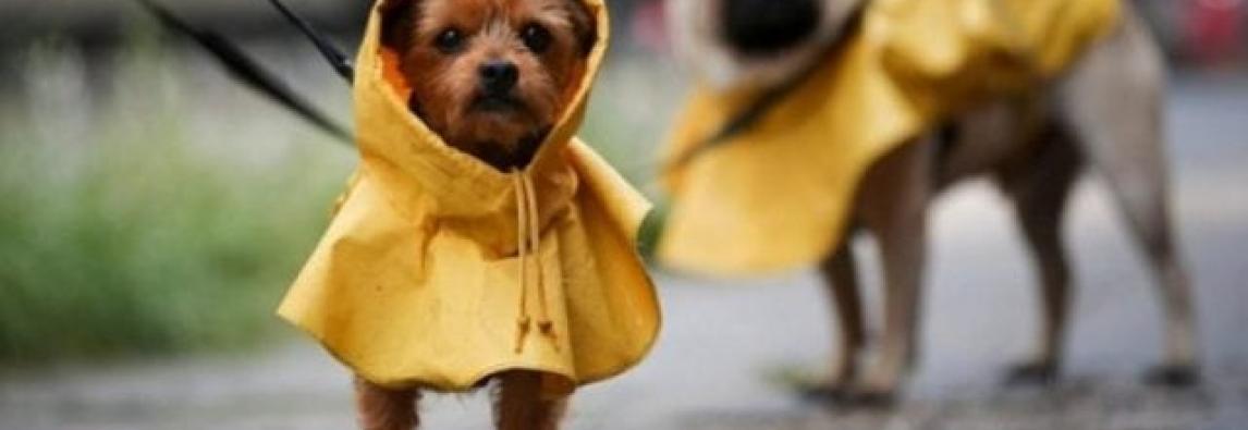 Animais precisam de cuidados especiais em dias de chuvas