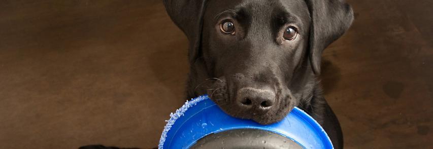 Cachorro sempre com fome é algo normal?