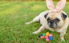 A Páscoa dos cães e gatos: 5 alimentos que devem ser evitados