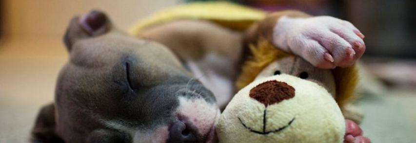 Por que o cachorro treme enquanto dorme
