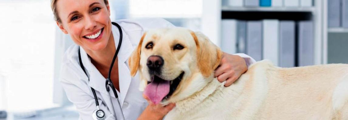 Campanha do 'Novembro Azul' também é válida para cães e gatos