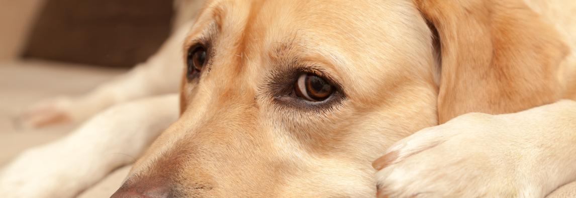 Origem e significado de algumas frases com cães