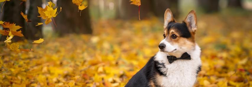 Quais os cuidados para se ter com os pets no outono