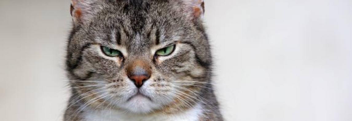 Gato malcriado: dicas para melhorar o comportamento do bichano!