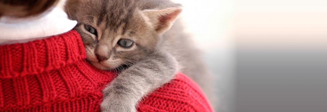 10 Vantagens de se ter um gato!
