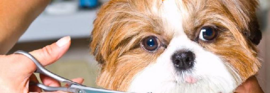 A tosa higiênica vai além da estética e ajuda a saúde dos pets