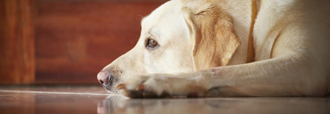 Vai viajar? Saiba porque não deve deixar o cachorro sozinho em casa l