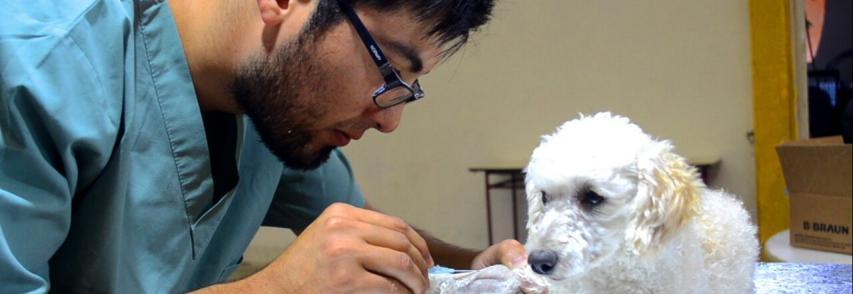 Castração de cachorro: 6 dúvidas respondidas sobre o tema
