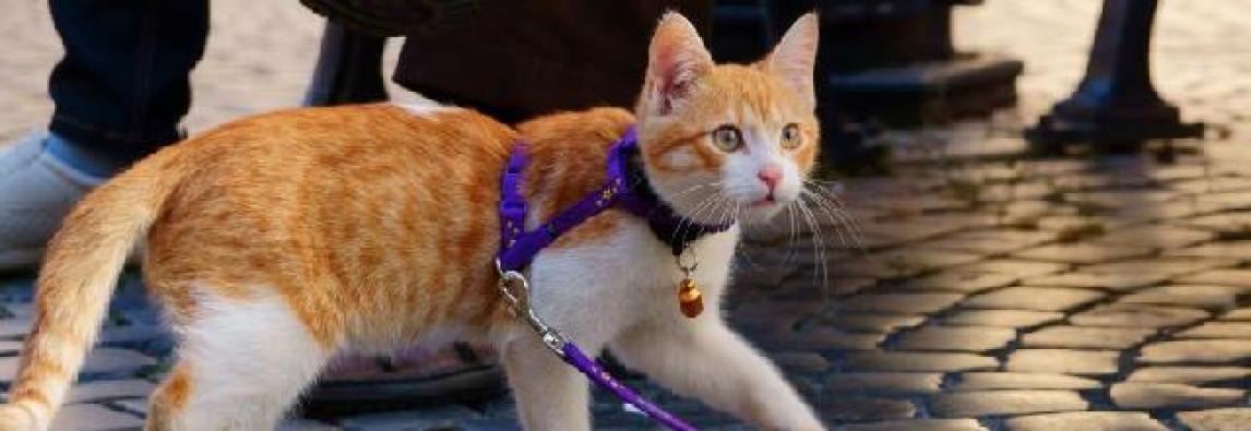 Passear com Gato – Dicas rápidas e interessantes