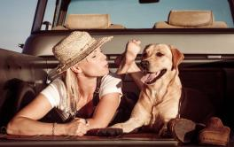 Veterinários dão dicas sobre o que fazer com o pet quando for viajar