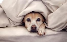 (Português) Você percebe se seu cachorro tem medo?
