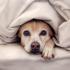 Você percebe se seu cachorro tem medo?