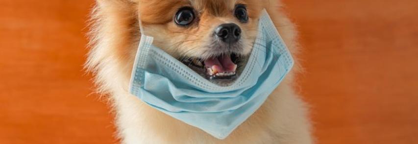 Vai levar o cachorro para passear na quarentena? Conselho de Veterinária faz recomendações