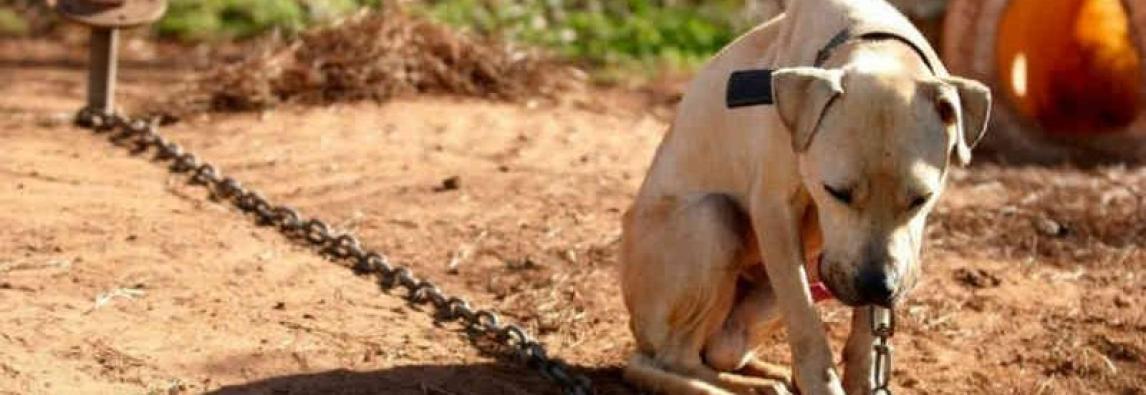 Abril laranja: prevenção aos maus tratos contra animais