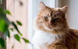 Alergias Em Gatos: Informações e Como Tratar
