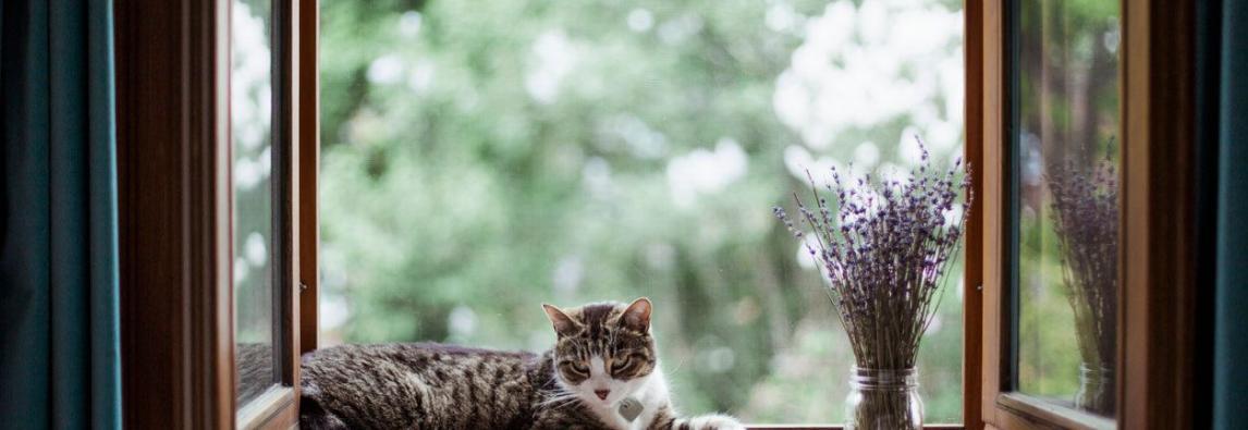 Gato na janela: por que bichanos gostam tanto desse lugar?