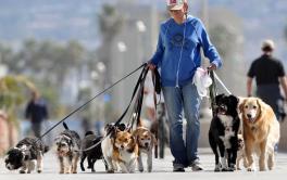 A profissão de Dog Walker (Passeador de Cães)