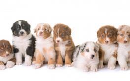 Filhotes de cachorro – Preparação e cuidados básicos