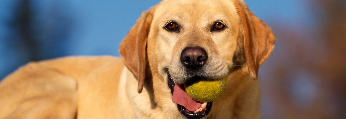 Os 5 problemas de comportamento mais comuns em cachorros