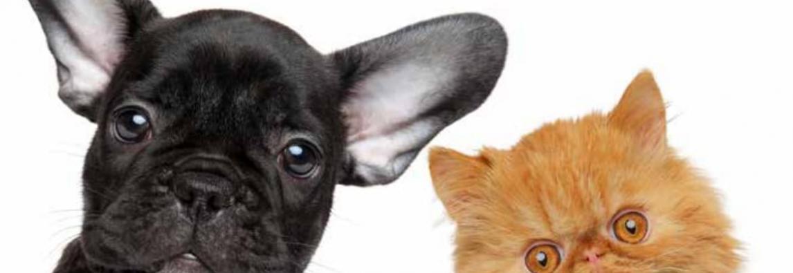 10 plantas venenosas para cães e gatos que são comuns em jardins e praças