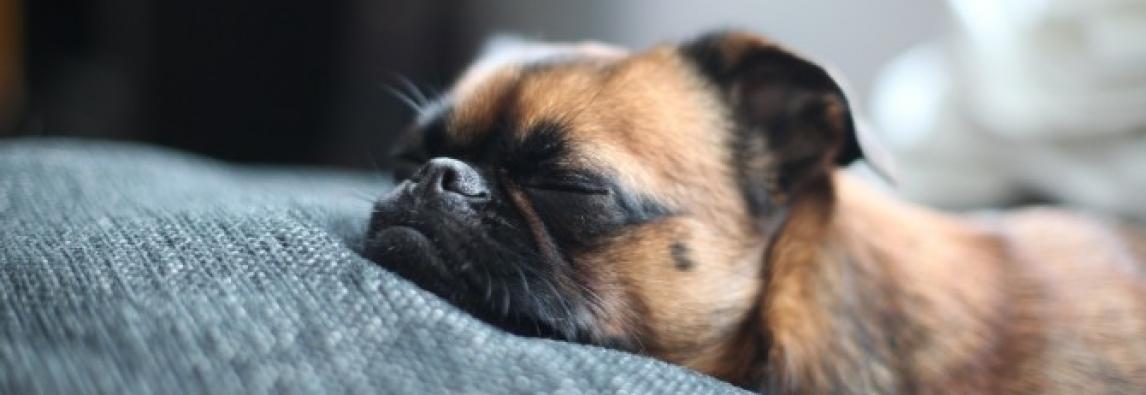 Como distrair um cachorro no inverno?