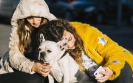 Cuidados com os animais no inverno são essenciais na prevenção de doenças