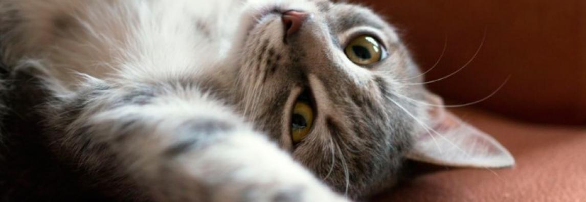 Yara: a gatinha que enxerga com o coração