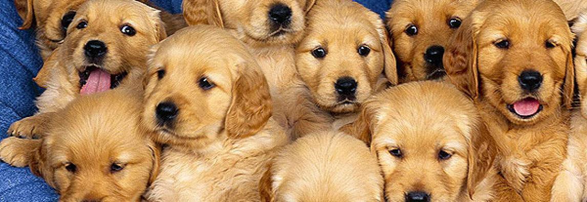 Começa a temporada de checkups para animais