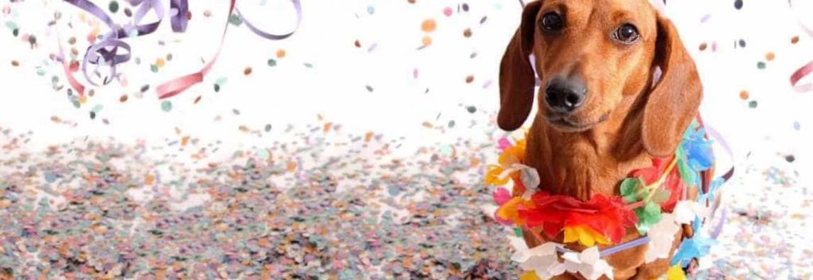 Pets e Carnaval – Como cuidar do seu pet