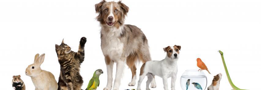Mercado pet: 132 milhões de animais de estimação no Brasil